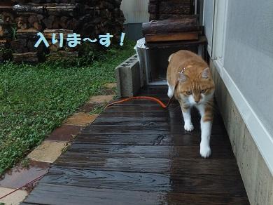 入りま~す