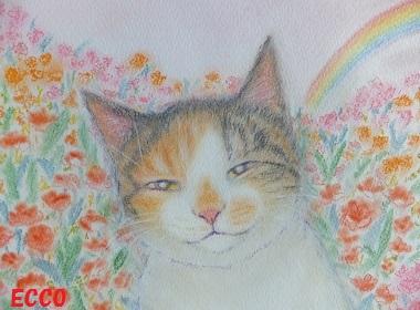ミケ子虹の向こうで