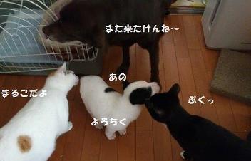 moblog_3ddaf7f6.jpg