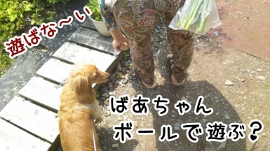 kinako102.jpg