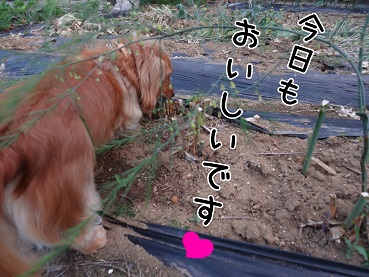 kinako108.jpg