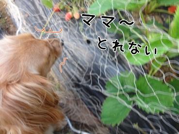 kinako110.jpg