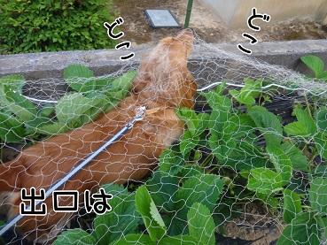 kinako112.jpg