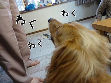 kinako128.jpg