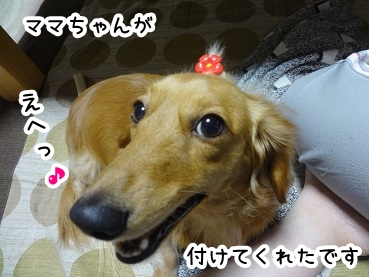 kinako212.jpg