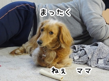 kinako223.jpg