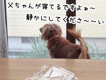 kinako225.jpg