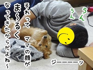 kinako230.jpg