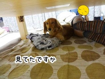 kinako245.jpg