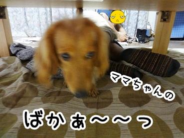 kinako248.jpg