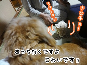 kinako296.jpg