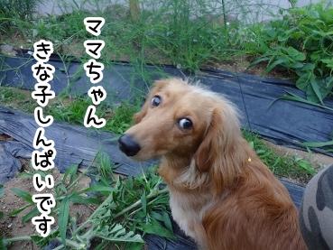 kinako306.jpg