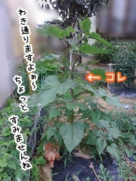 kinako308.jpg