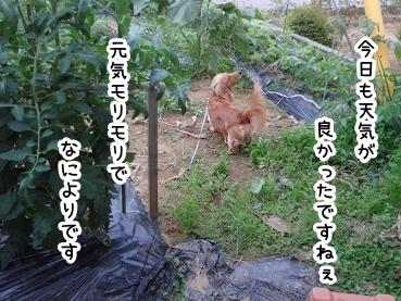 kinako309.jpg