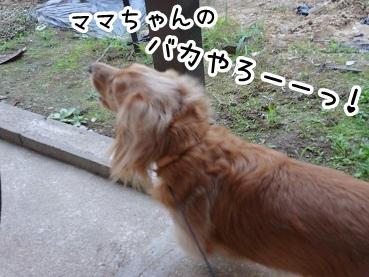 kinako320.jpg