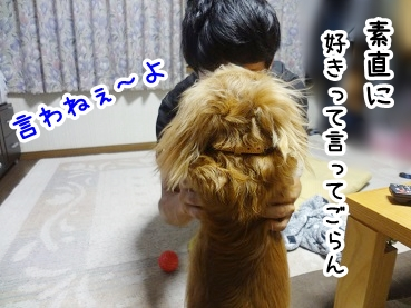kinako342.jpg