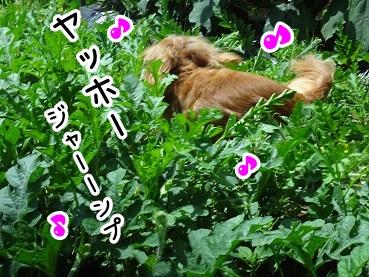 kinako386.jpg