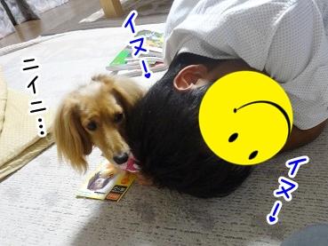 kinako410.jpg