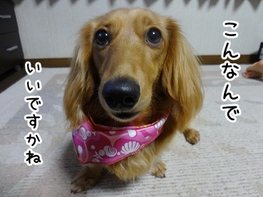 kinako412.jpg