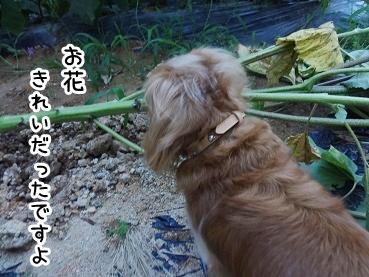 kinako419.jpg