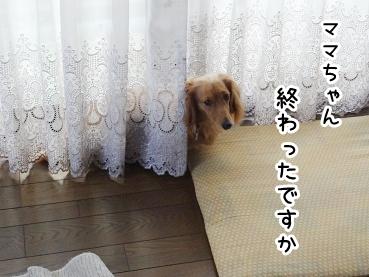 kinako430.jpg