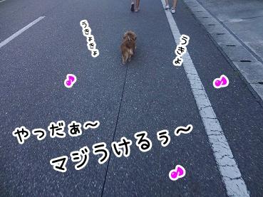 kinako438.jpg