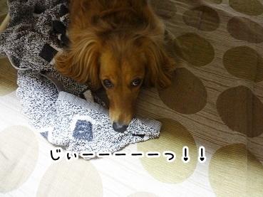 kinako440.jpg