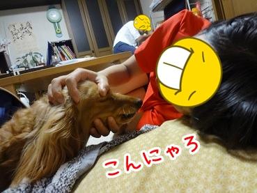 kinako461.jpg