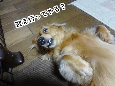 kinako464.jpg