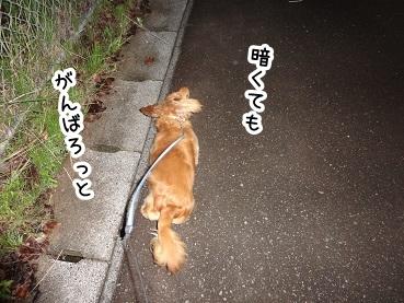 kinako465.jpg