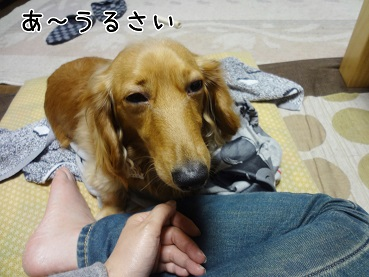kinako48.jpg