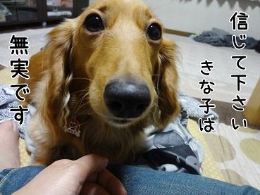 kinako49.jpg