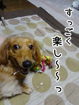 kinako528.jpg