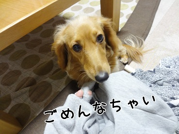kinako54.jpg