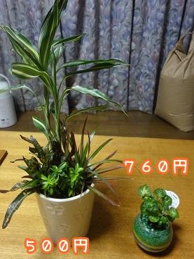 kinako623.jpg