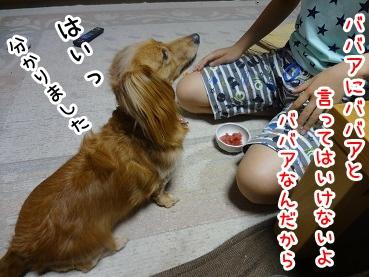 kinako632.jpg