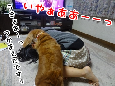 kinako680.jpg