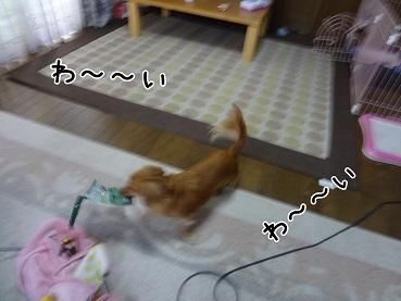 kinako69.jpg