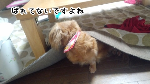 kinako695.jpg