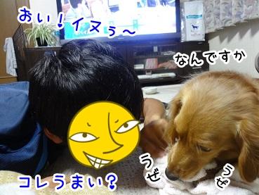 kinako700.jpg