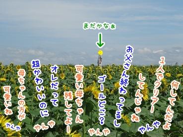 kinako724.jpg