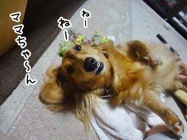 kinako748.jpg
