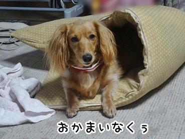 kinako759.jpg
