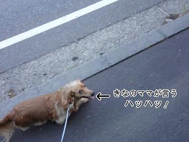 kinako76.jpg