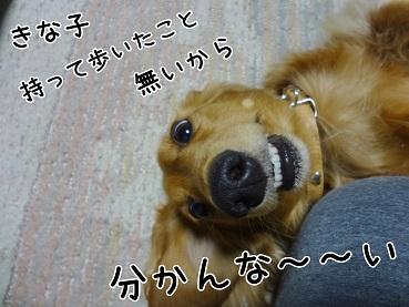 kinako77.jpg