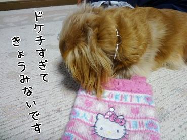 kinako81.jpg