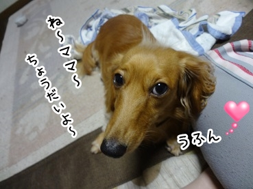 kinako863.jpg