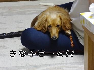 kinako88.jpg
