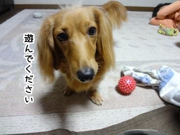 kinako904.jpg