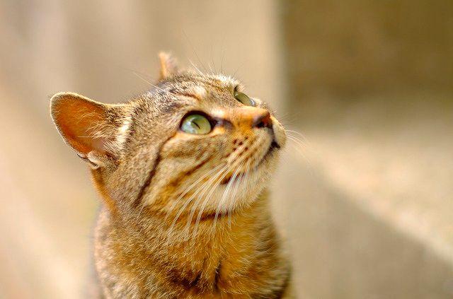 藍の島の猫ニャン2